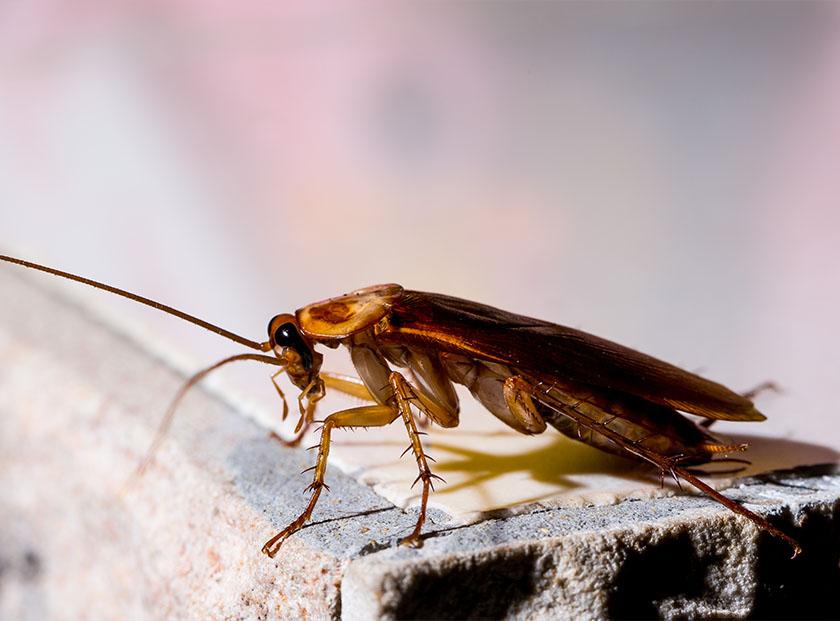 Kakerlaken bekämpfen in München